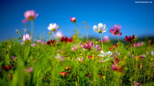Spring-wildflowers-Wallpaper